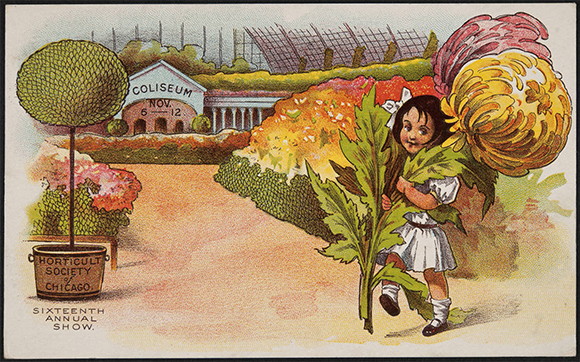 PHOTO: An early postcard of the Society event of the year: the annual Chrysanthemum Show.