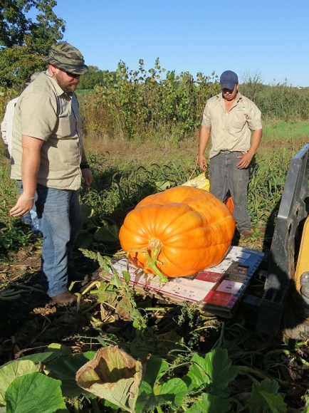 PHOTO: Growers and staff positioning a mammoth pumpkin on a forklift.