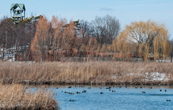 PHOTO: view of ducks from the prairie.