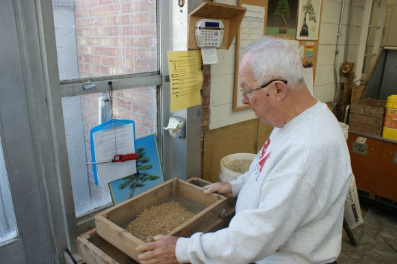 PHOTO: Volunteer Dick Anderson sifts soil for repotting the bonsai collection.