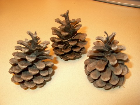PHOTO: Pictured here are three pine cones of similar size, shape, and color.