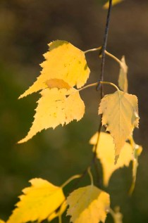 PHOTO: Fall leaves in the Sensory Garden.