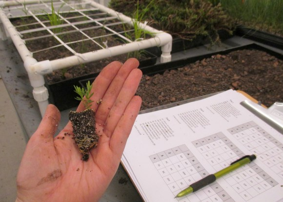 PHOTO: Hand holding a seedling; paperwork is in the background, along with a seedling tray.