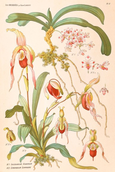 PHOTO: Illustrated orchids from Les Orchidees par Henry Lambert.