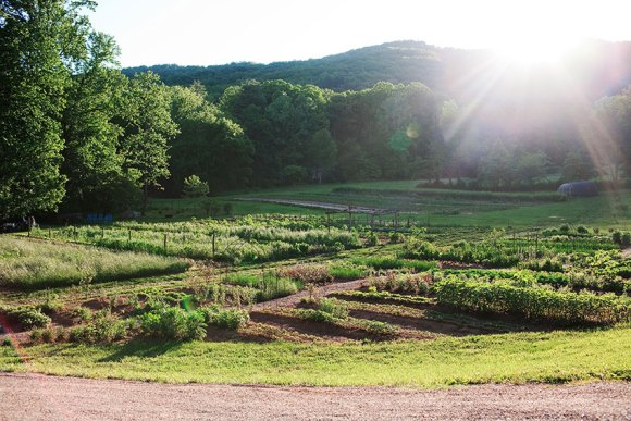 PHOTO: Morning at Blackberry Farm.