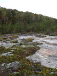 PHOTO: Moss Rock Preserve at the habitat of Quercus georgiana