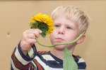PHOTO: Nature Preschool student examines a sunflower.