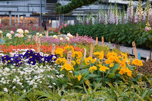 Summer plantings await in the Production Greenhouses.