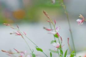 PHOTO: Rimland horticultural therapy garden