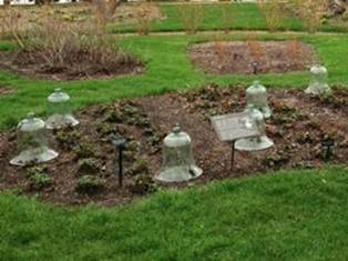 PHOTO: Glass cloche cover strawberry plants in a garden plot in early spring.