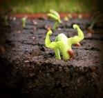 Strong seedling