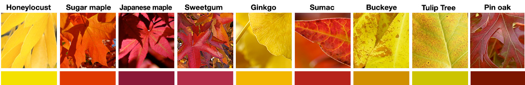 Fall Color(ing) Activity Answers