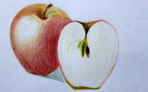 ILLUSTRATION: Apples by Sophia Siskel