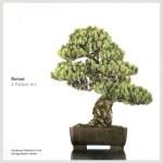 bonsai_book