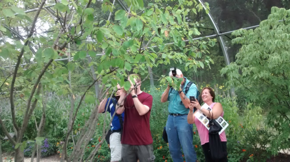 "PHOTO: Photographers snap pictures of our new atlas moth, ""Aaliyah."""