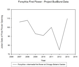 forsythia data