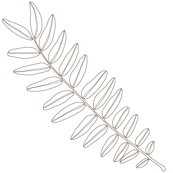 honeylocust leaf