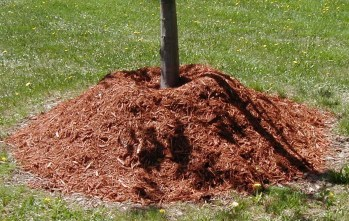 PHOTO: Mulch piled up in a volcano around the base of a young tree.