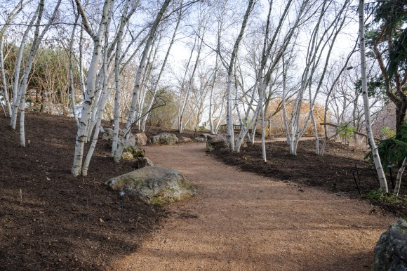 PHOTO: The birch walk in fall, leaf-mulched, with white birch trunks providing contrast.