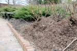 rose mulch310