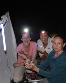 PHOTO: Sophia Siskel holds a hawkmoth caught at night while researchers look on.