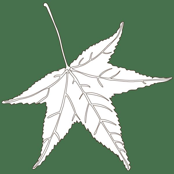 sweetgum leaf