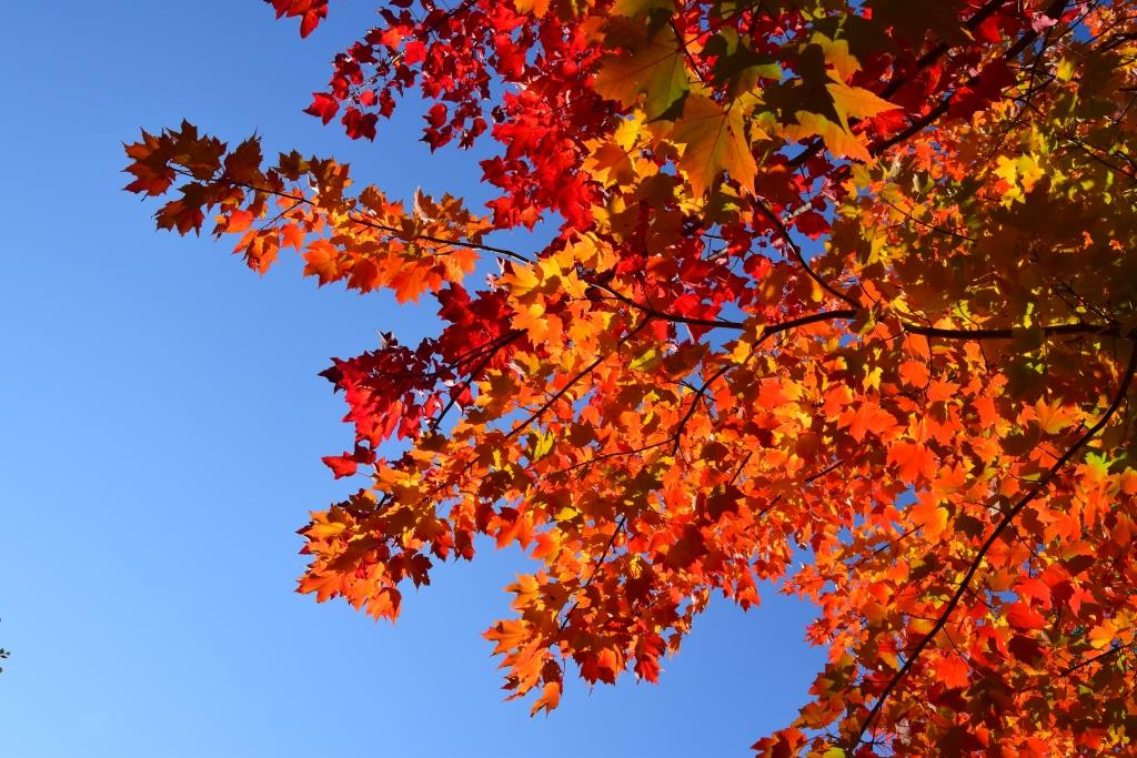 Promenade automnale au Québec – Couleurs d'automne
