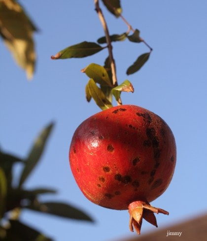 """A Pomegranate"" by jcphotos - courtesy of deviantART"