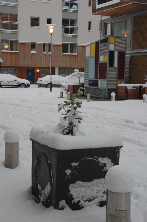 morning_in_snow
