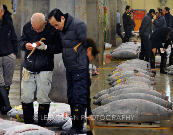 tuna-auction