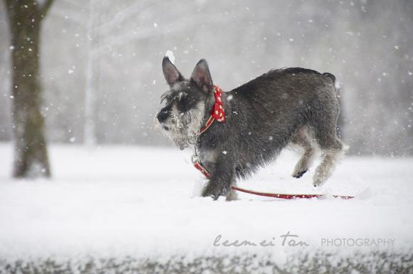 snow-london-4