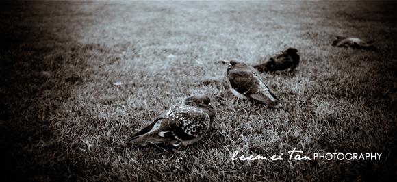 birds-on-the-grass