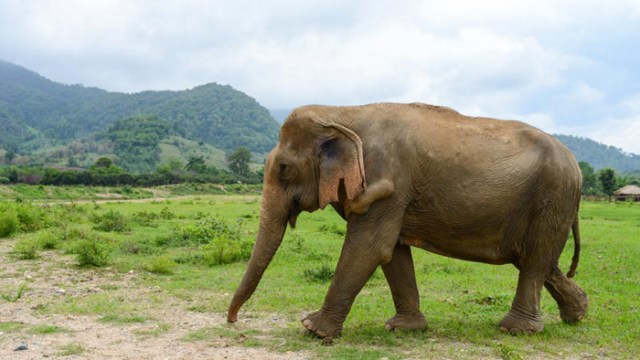 elephant-nature-park-chiang-mai-2