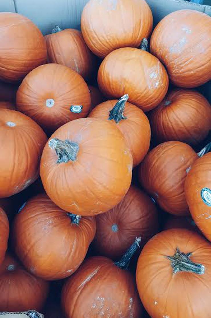 pumpkin-mycurvesandcurls Weekend Reads
