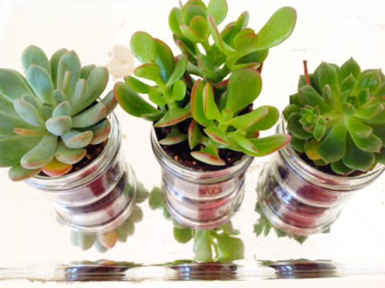 Succulent Plants Everywhere!