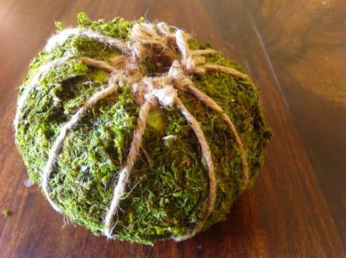 Moss Pumpkin Bottom Side