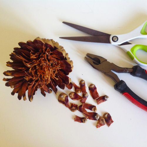 Removing Pinecone Scales - mydearirene