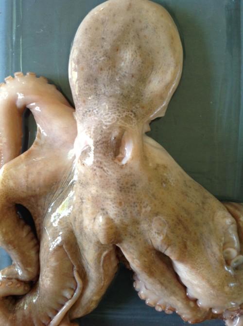 Octopus III - mydearirene.com
