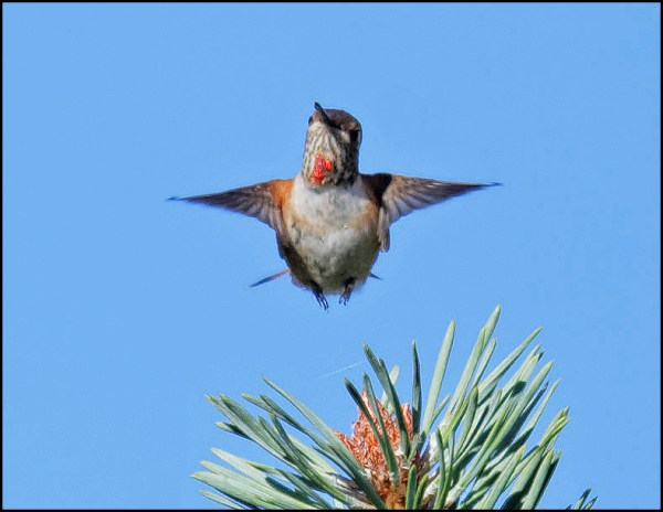 Photos by LeRoy Van Hee