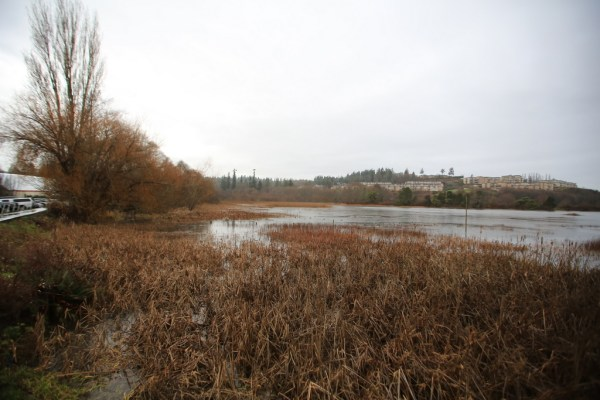 The Edmonds Marsh after a full day of rain in January 2016, with the water reaching the boardwalk. (Photo by Bill Anderson)