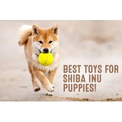 Small Crop Of Baby Shiba Inu