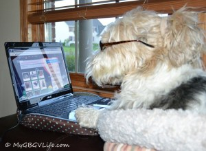Secretly signing up Katie on MatchPuppy.com