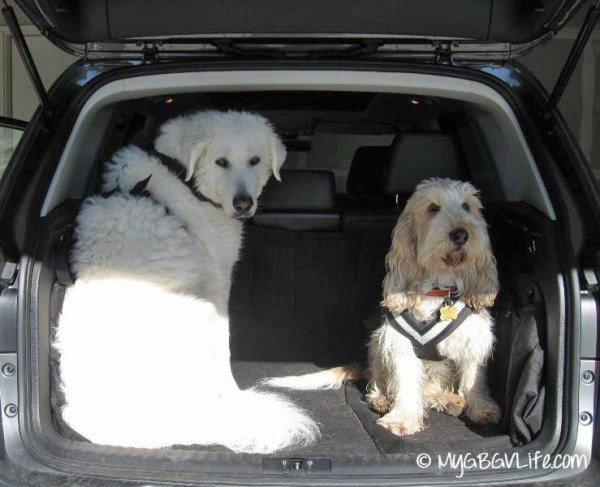seatbelts on dogs