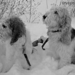 Snowy Faces | GBGV | Black and White Sunday