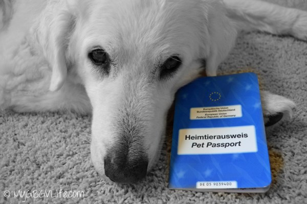 My GBGV Life Katie with her German pet passport