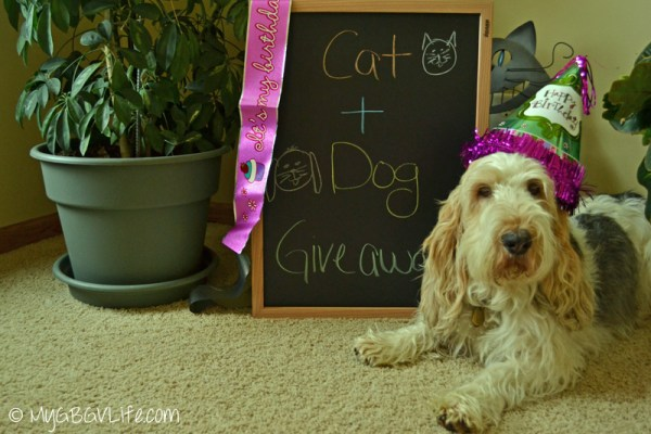 My GBGV Life Emma cat and dog giveaway