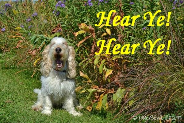 My GBGV Life Emma howls about #dogwalkingweek
