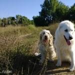 Walking With A Senior Dog #DogWalkingWeek