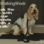 Break The Ice With A Walk #DogWalkingWeek