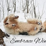 Embrace Winter